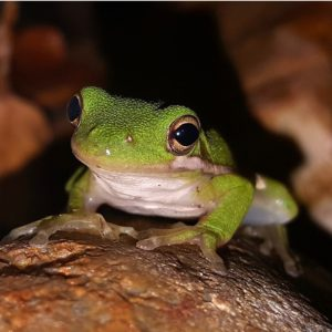 frog-1514727_1920